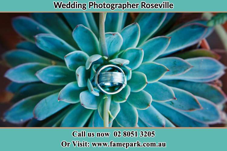Photo of the wedding ring design at the top of the plant Roseville NSW 2069